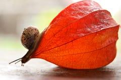 Velocidad del caracol que da un paseo Imagen de archivo libre de regalías