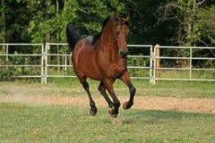 Velocidade cheia Fotografia de Stock Royalty Free