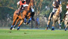 Velocidade do cavalo imagens de stock royalty free