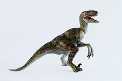 A Velociraptor. Dinosaur Stands Against a White Background royalty free stock photo