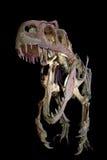 Velociraptor stockbild