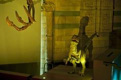 Velociraptor Fotografie Stock