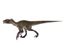 Velociraptor aislado Imágenes de archivo libres de regalías