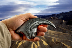 Velociraptor Claw. Royalty Free Stock Photo