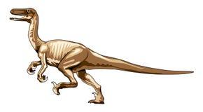 Velociraptor del dinosaurio Fotografía de archivo
