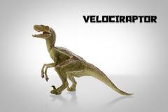 Velociraptor Stock Photo