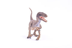 Velociraptor dinosaur. A Velociraptor dinosaur stands against white background royalty free stock images