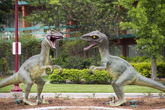 Velociraptor Dinosaurs royalty free stock photo