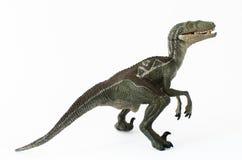 Velociraptor en el fondo blanco Imágenes de archivo libres de regalías