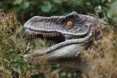 Velociraptor Stock Photography