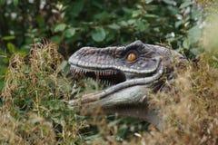 Velociraptor Royalty Free Stock Image