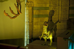 Velociraptor Stock Photos