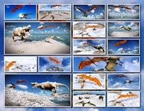 Velociraptor and pterodactyl 3d rendering Stock Photos