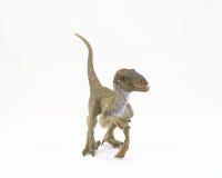 Velociraptor Royalty Free Stock Photo