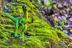 Velociraptor walking on old moss with small shrub Stock Photography