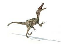 Velociraptordinosaurier, wissenschaftlich korrekt, mit Federn. vektor abbildung