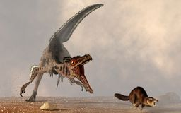 Velocirator Chasing Mammal. A velociraptor chases a small mammal. The carnivorous dinosaur is about to make a meal out of the little brown rodent. Run, little stock illustration