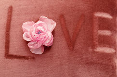 Velor background with flower Stock Photos