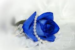 Velours bleu Photo stock