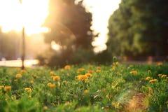 Velours dans le coucher du soleil Photo libre de droits