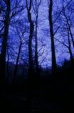 Veludo azul Imagens de Stock Royalty Free
