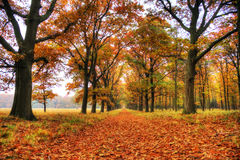 Veluwe in autunno fotografia stock