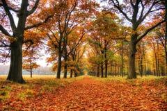 Veluwe in de herfst stock foto