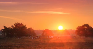 Veluwe sunrise landscape Royalty Free Stock Photo