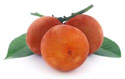 Velvet apples Royalty Free Stock Photo