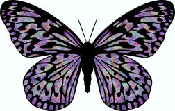 Velvet Butterfly Royalty Free Stock Photography