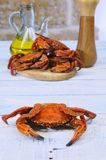 Velvet crab. Royalty Free Stock Photography