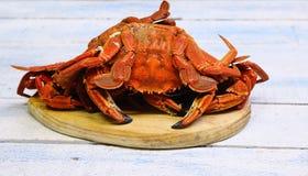Velvet crab. Stock Photo