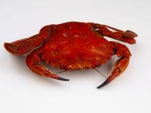Velvet crab Royalty Free Stock Image