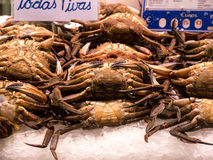 Velvet crabs. Some raw velvet crabs on crushed ice, ready for be cooked Royalty Free Stock Photography
