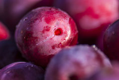 Velvet plum, close up view Stock Photos
