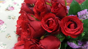 Velvet red roses Stock Photos