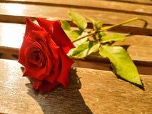 Velvet rose Stock Image