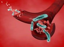 Vena e globuli rossi attaccati da un virus, circolazione dei batteri all'interno di un'arteria Escherichia coli Sezione di una ve illustrazione vettoriale