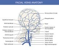 Ibrido chirurgia caldamente vascolare