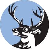 Venados de cola blanca Buck Head Circle Retro ilustración del vector