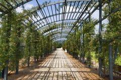 Venaria Reale trädgård, Piemonte, Italien royaltyfri fotografi