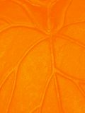 Venas anaranjadas Imagen de archivo