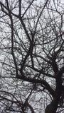Venas del árbol Imágenes de archivo libres de regalías