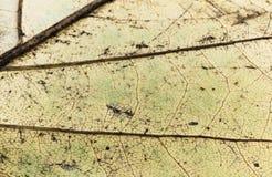 venation van gele blad macro dichte omhooggaande, abstracte creatieve achtergrond stock foto's