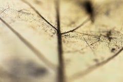 venation van gele blad macro dichte omhooggaande, abstracte creatieve achtergrond stock afbeelding