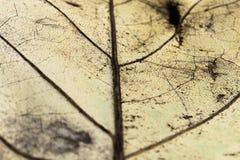 venation van gele blad macro dichte omhooggaande, abstracte creatieve achtergrond stock foto