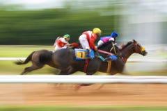 Vencedor da corrida de cavalos Fotografia de Stock Royalty Free