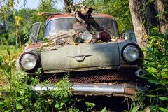 Vencedor 1960 de Vauxhall Imagem de Stock