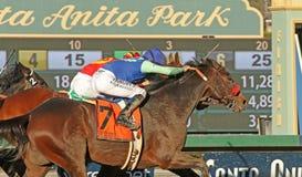 Vencedor por um nariz Foto de Stock Royalty Free