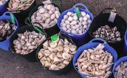 A venda das lembranças esvazia shell imagens de stock